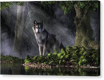 Wolf In The Forest Canvas Print