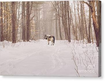Kathy Rinker Canvas Print - Wolf In Winter by Kathleen Rinker