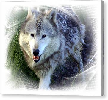 Wolf Canvas Print by Marty Koch