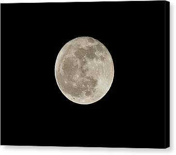 Wolf Moon Canvas Print by Lara Ellis