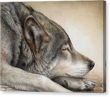 Wolf Nap Canvas Print by Pat Erickson