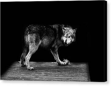 Wolf Portrait Canvas Print by Martin Newman