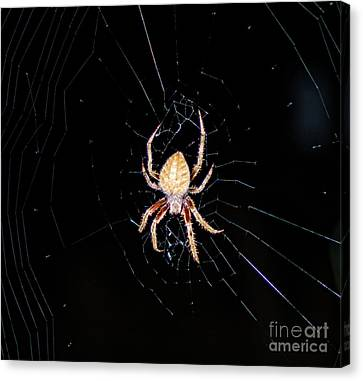 Wolf Spider Back View Canvas Print