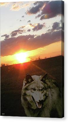 Wolf Sunset Canvas Print by Debra     Vatalaro