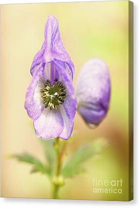 Wolf's Bane Flower With Pistils Canvas Print