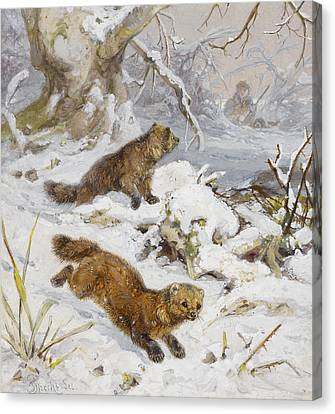 Wolverines In The Snow Canvas Print by August Specht