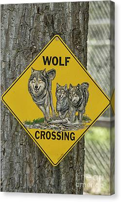 Crosswalk Canvas Print - Wolves Crossing by Patricia Hofmeester