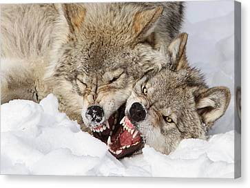 Wolves Rules Canvas Print by Mircea Costina