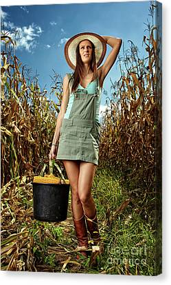 Woman Farmer Carrying A Bucket Of Corn Cobs Canvas Print by Catalin Petolea