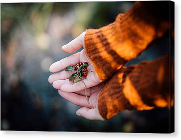 Woman Hands Holding Cranberries Canvas Print by Aldona Pivoriene
