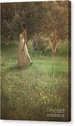 Woman In Olive Orchard Canvas Print by Mythja Photography