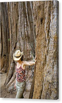 Observer Canvas Print - Woman Leaning On Giant Sequoia Tree by Dawn Kish