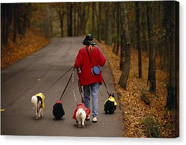 Woman Walks Her Army Of Dogs Dressed Canvas Print by Raymond Gehman