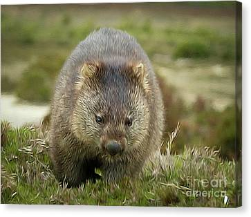 Wombat Tasmania #6 Canvas Print by Teresa A and Preston S Cole Photography
