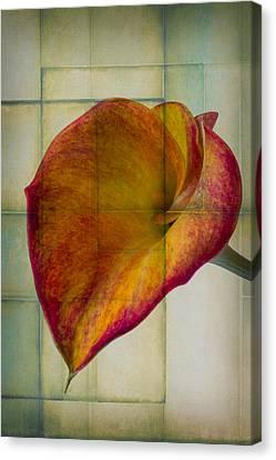 Wonderful Calla Lily Canvas Print by Garry Gay