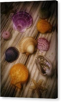 Wonderful Shell Still Life Canvas Print