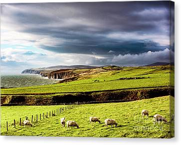 Canvas Print featuring the photograph Wonders Of Thrumster by Anthony Baatz