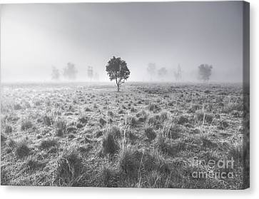 Wondrous Misty Background Canvas Print by Jorgo Photography - Wall Art Gallery