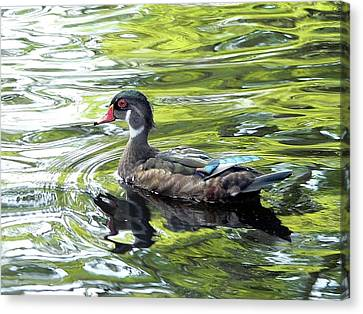 Wood Duck Canvas Print by Al Powell Photography USA