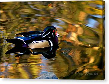 Bruster Canvas Print - Wood Duck by Clayton Bruster