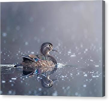Canvas Print featuring the photograph Wood Duck Hen by Bill Wakeley