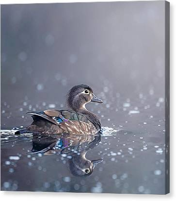 Wood Duck Hen Square Canvas Print