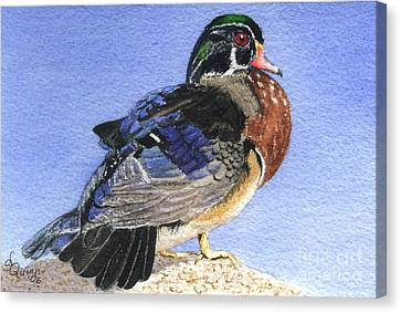 Wood Duck Canvas Print by Lynn Quinn