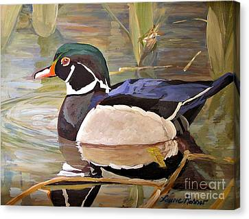 Wood Duck On Pond Canvas Print