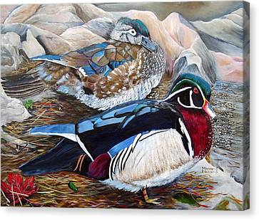 Wood Ducks  Canvas Print by Marilyn  McNish