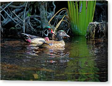 Dunnellon Canvas Print - Wood Ducks Pair by Sally Weigand