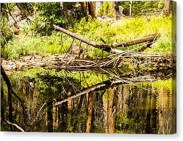 Wood Reflections Canvas Print by Brian Williamson