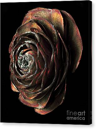 Wood Rose Canvas Print by Russ Brown