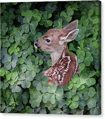 Canvas Print featuring the photograph Wood Sorrel Blanket by Sally Banfill