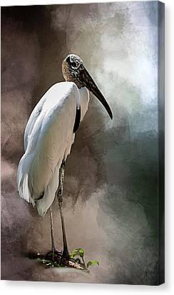 Wood Stork Canvas Print by Cyndy Doty