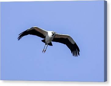 Wood Stork Canvas Print by Gary Wightman