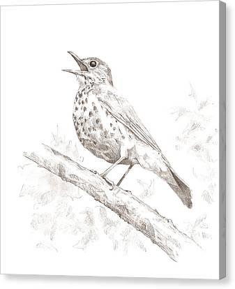Wood Thrush Canvas Print