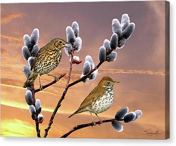 Wood Thrush And Pussy Willow Tree Canvas Print