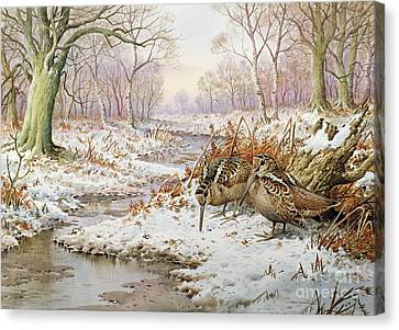 Woodcock Canvas Print by Carl Donner
