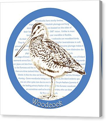 Woodcock Canvas Print by Greg Joens