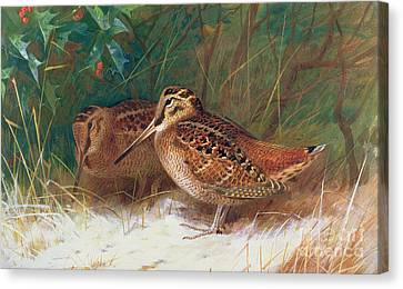 Woodcock In The Undergrowth Canvas Print by Archibald Thorburn