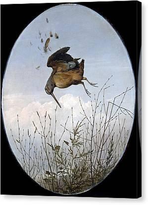 Woodcock Canvas Print by Thomas Hewes Hinckley