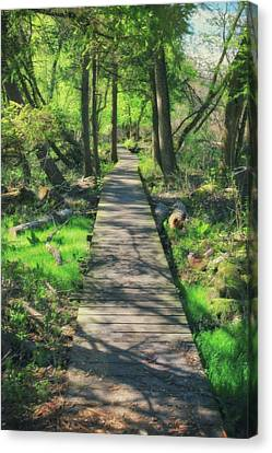 Wooded Path - Spring At Retzer Nature Center Canvas Print