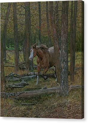 Wooded Run Canvas Print