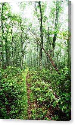 Canvas Print featuring the photograph Wooded Trail by Alan Raasch