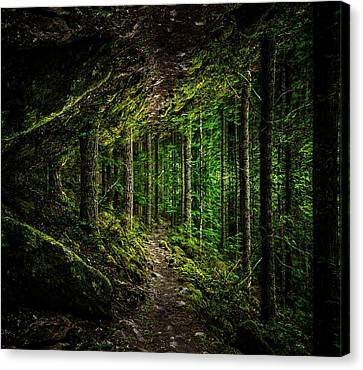 Wooded Trail Reflection Canvas Print
