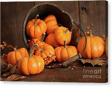 Wooden Bucket Filled With Tiny Pumpkins Canvas Print by Sandra Cunningham