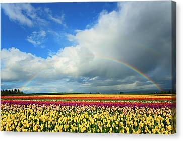 Wooden Shoe Rainbow Canvas Print by Patrick Campbell