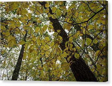 Canvas Print featuring the photograph Woodland Canopy by Andrew Pacheco