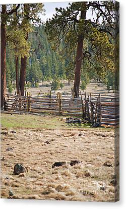 Woodland Corral - White Mountains Arizona Canvas Print by Donna Greene