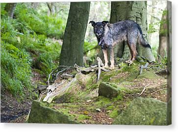 Woodland Dog Canvas Print by David Isaacson